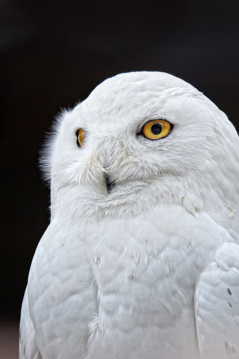 Closeup photo of white owl
