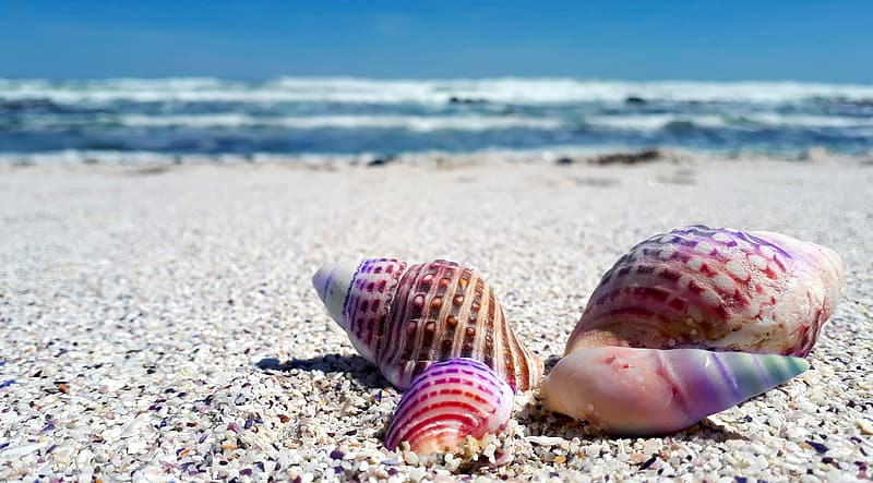 Four assorted-color seashells on white sand beach during daytime
