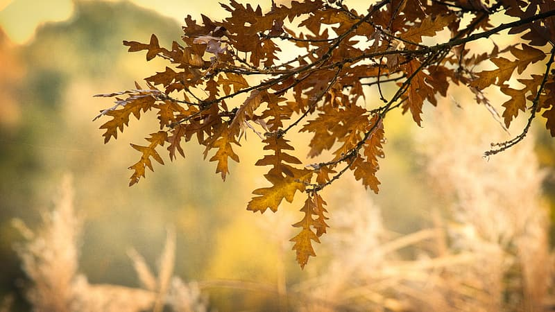 Brown leaves on brown tree branch during daytime