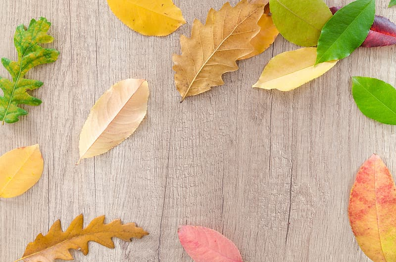 Assorted-color of leaves on gray wooden surface