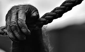 Grayscale photo primate hand holding on rope