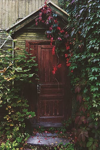 Brown and gray wooden house with green leaf plants