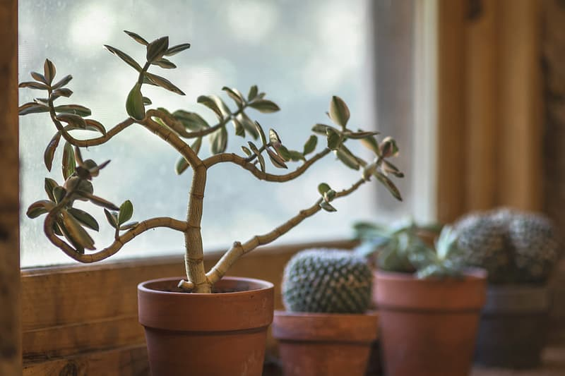 Selective focus photography of green leaf plant in brown clay pot