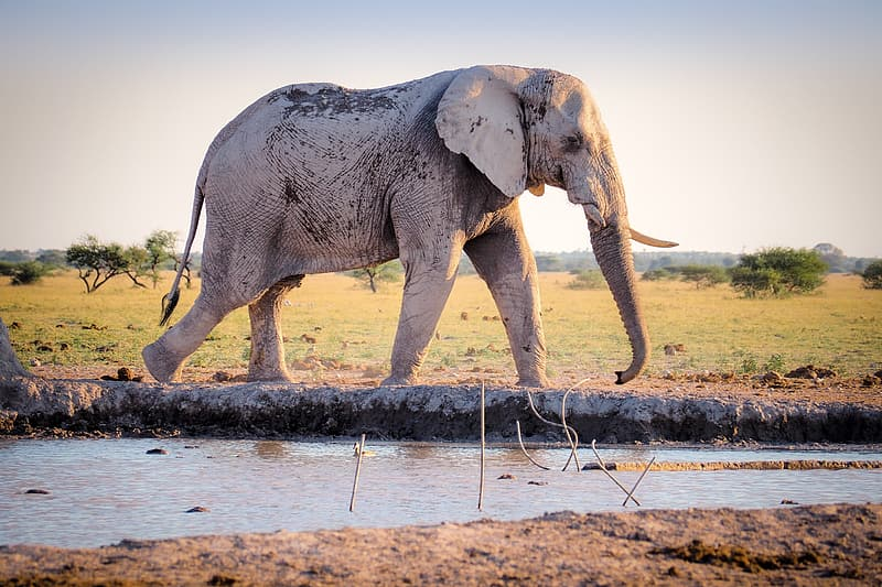 Gray elephant in mud during daytime
