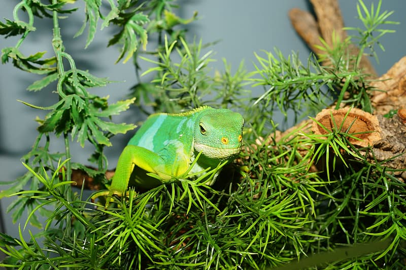 Green reptile on green leaf plant