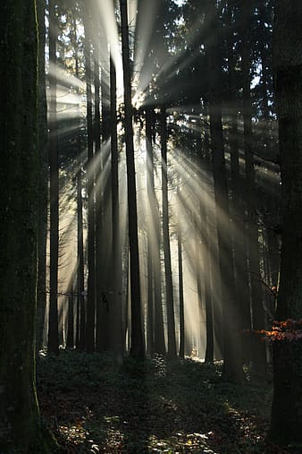 Sunlight beam on the forest