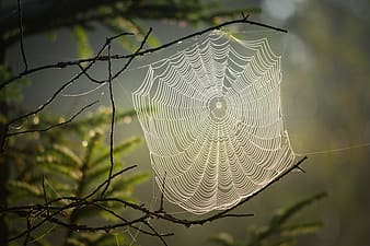 Spider web on brown tree branch during daytime