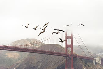 Flock of bird flying near cable bridge