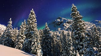 Green pine trees on snow covered mountain during daytime