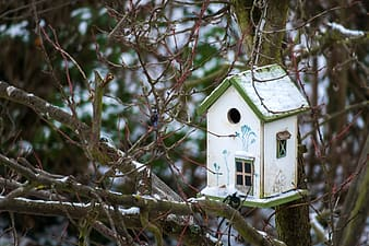 White wooden bird house on brown tree branch during daytime
