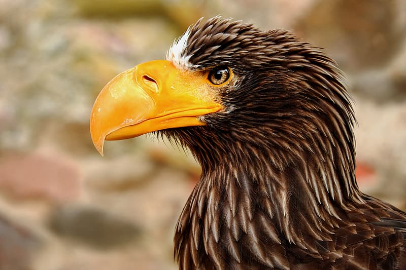 Selective focus photography of yellow-beaked eagle