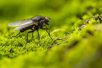 Black and gray fly perched on green leaf in close up photography during daytime