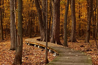 Wooden bridge beneath a forest
