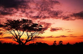 Silhouette photography of trees during sunset