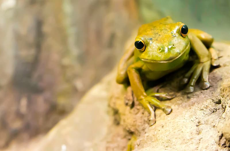 Selective focus photography of brown and green frog