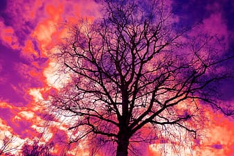 Time lapse photography of tree under clouds