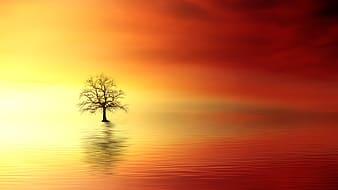 Bare tree surrounded by body of water digital wallpaper