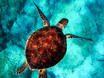 Brown and white tortoise on clear blue water