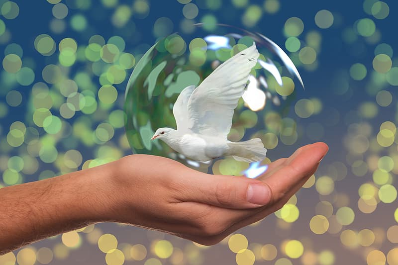 Bokeh photography and selective focus photography of a human hand holding white Pigeon water globe