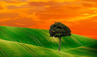 Green field and tree painting