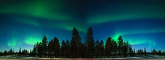 Northern lights above trees panorama photography