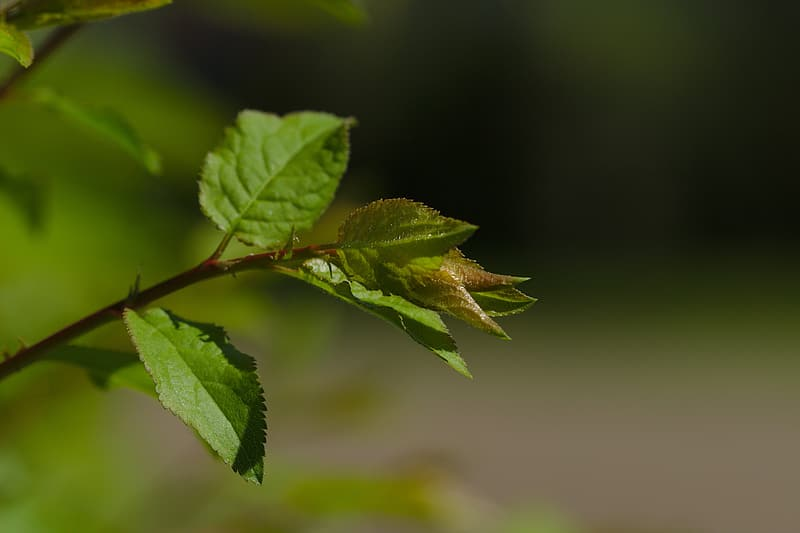 Green leaf plant in close up photography