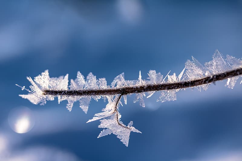 Shallow focus photography of branch with snow