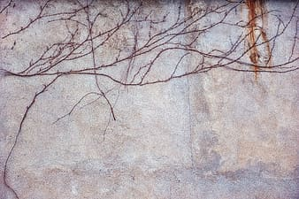 Brown tree branch painting