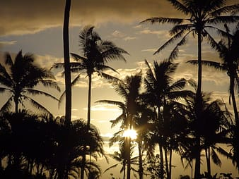 Silhouette photo of coconut trees at golden hour