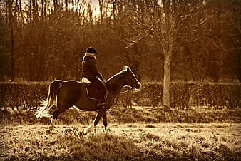 Man riding horse in the field