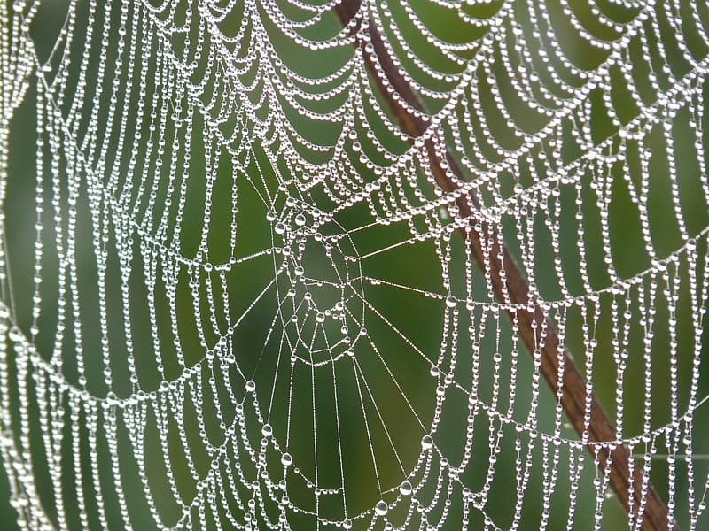 Close up photography of spider web with morning dew