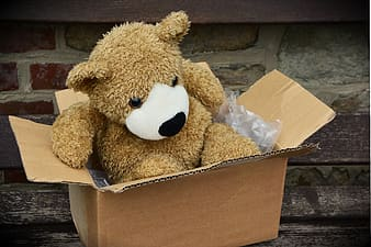 Brown bear plush toy in box