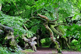 Green leafed trees