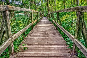 Brown wooden bridge in the woods