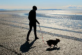 Person walking on beach with dog during daytime