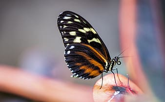 Black and white butterfly on persons finger