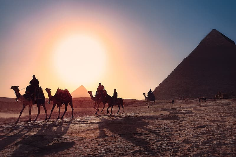 People riding camels on desert during daytime