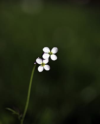 Micro lens photo of two white flowers