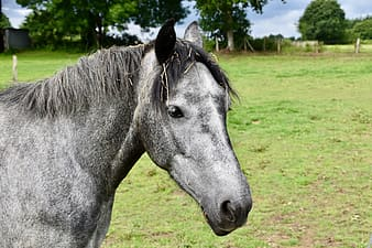 Black horse on green grass field during daytime