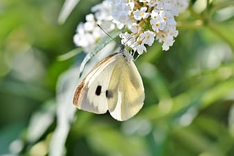 White and purple butterfly perched on white flower in close up photography during daytime