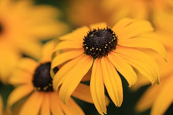 Yellow and black flower in macro lens photography