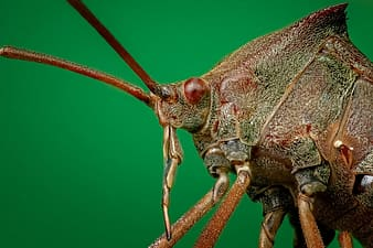 Macro photography of brown insect
