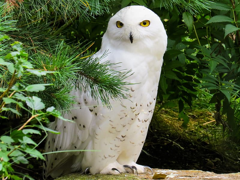 White owl on brown tree branch