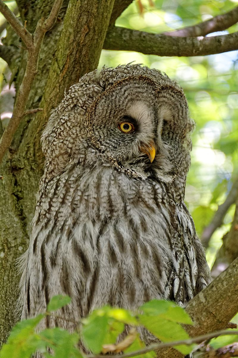 Grey owl on tree branch during daytime