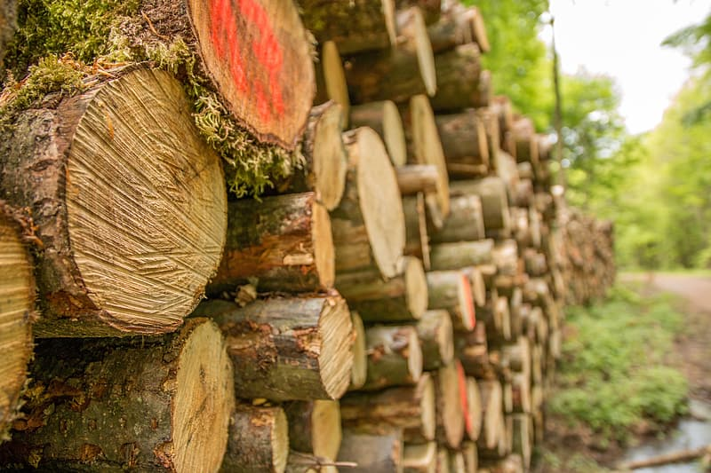 Close-up photography of brown tree logs