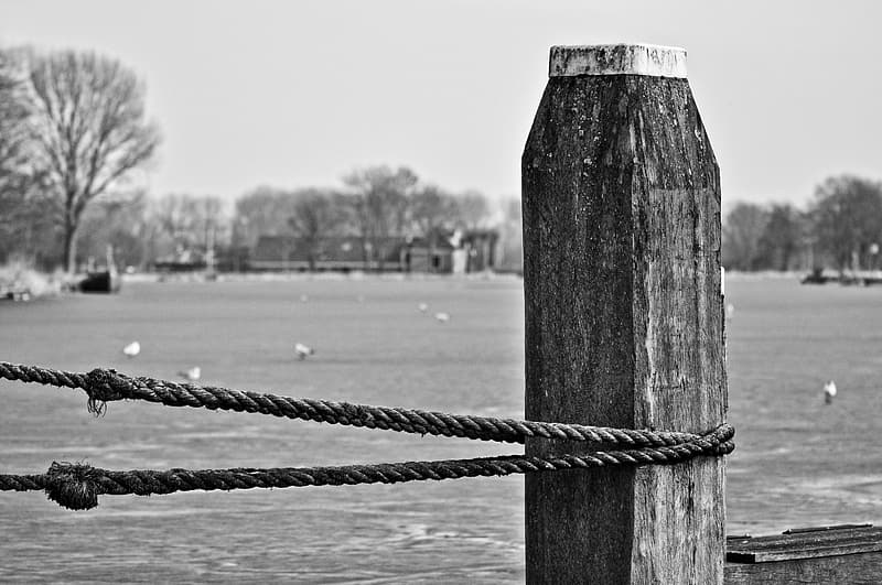 Grayscale photo of rope on wooden post