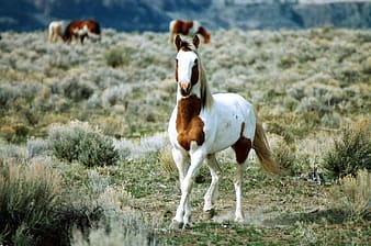 White and brown horse in the middle of green grass field during daytime