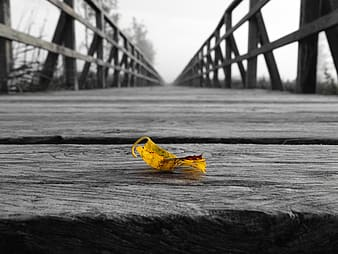 Selective color photo of yellow leaf on wooden bridge