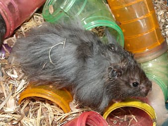 Gray and black rodent surrounded by tunnel