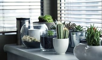 Green succulent plants and cacti in pots
